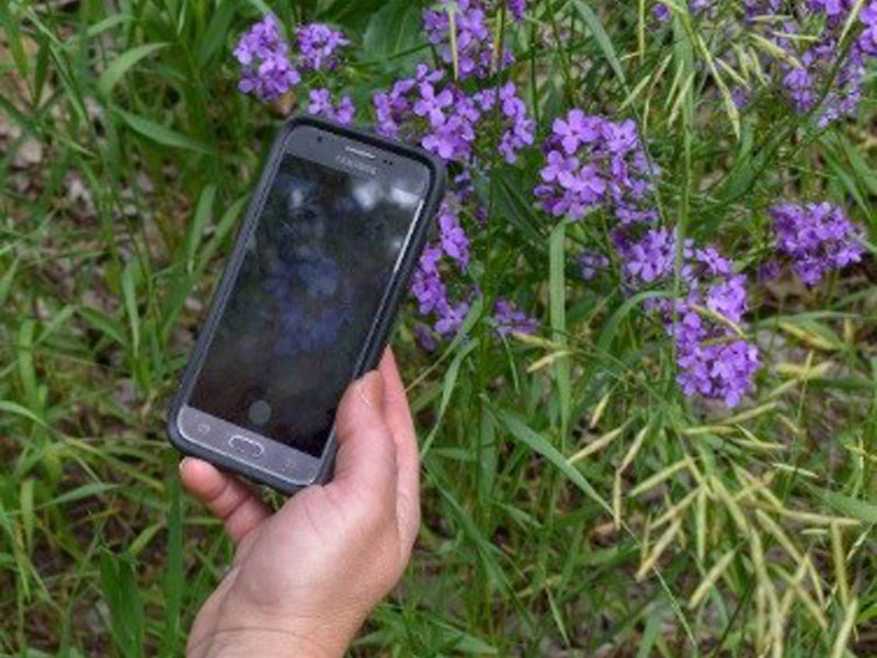 Earth Citizen Science with GLOBE Observer