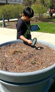 BioBlitz participant examining a planter with a magnifying glass.