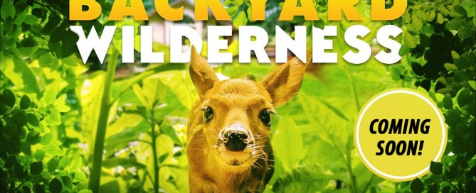 backyard-wilderness-exhibits