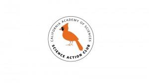 Bird Scouts Logo