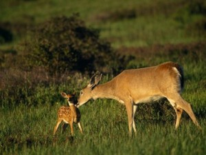 primary-EE-at-the-Depot--Oh--Deer--1461783624-533x400