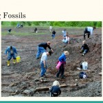 CollectingFossils