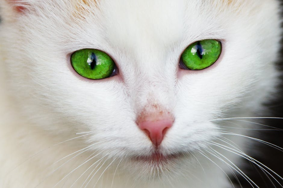 animal-cat-domestic-eye-87413